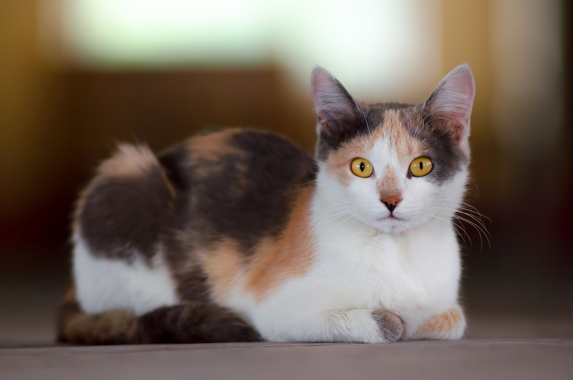 Diarrhea In Cats Treatment Naturally