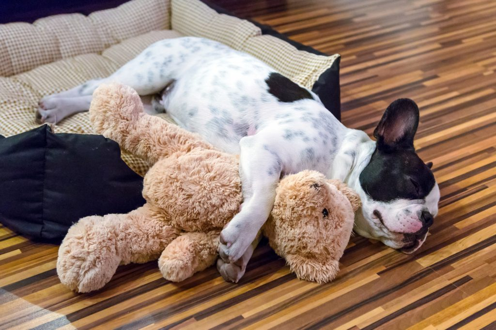 8 Of The Best Organic Dog Beds To Help Your Pet Rest Easy Barkspace