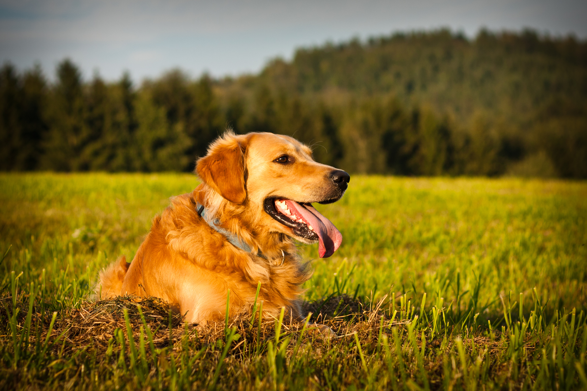 Treating Dogs Upper Respiratory Infection Cipro