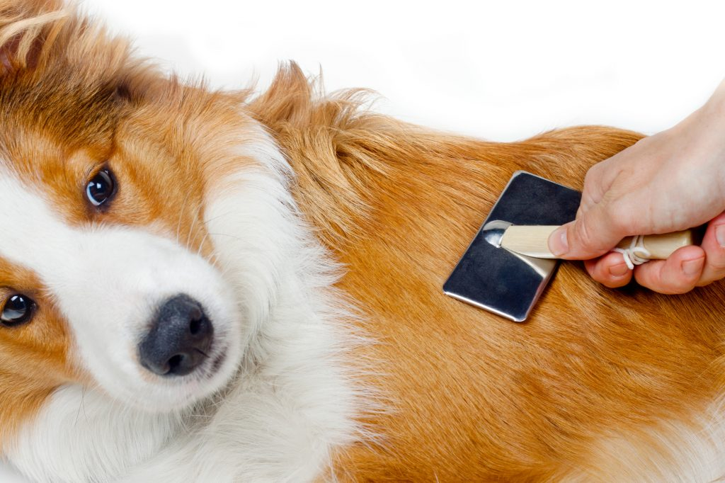 What Are The Best And Safest Ways To Keep Your Dog From