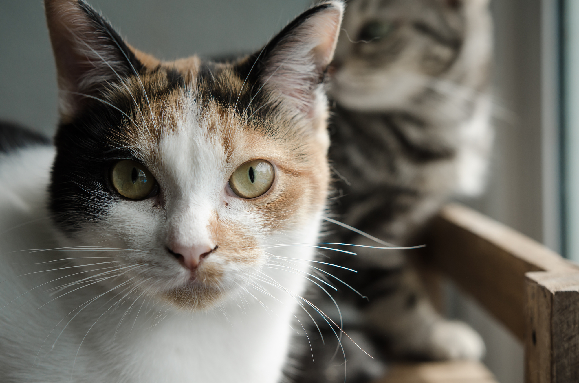 how to understand cats body language