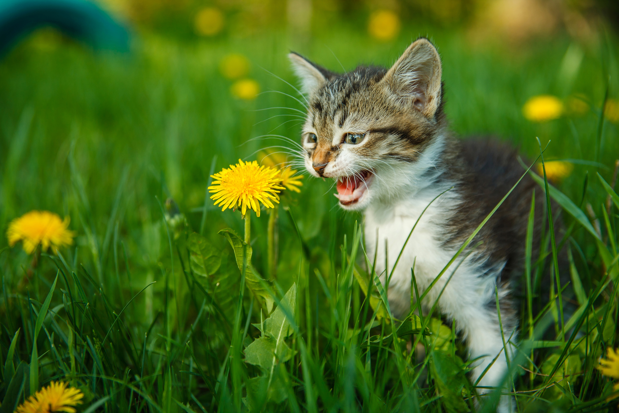 Flowers That Are Toxic To Cats And Dogs