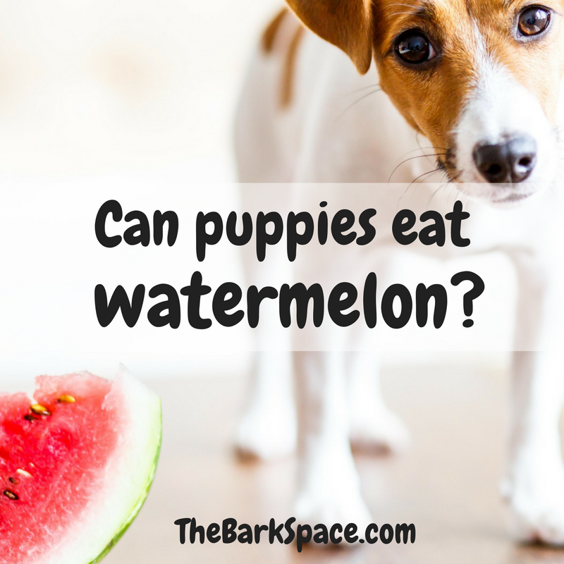 Can puppies eat watermelon barkspace for What parts of a watermelon can you eat