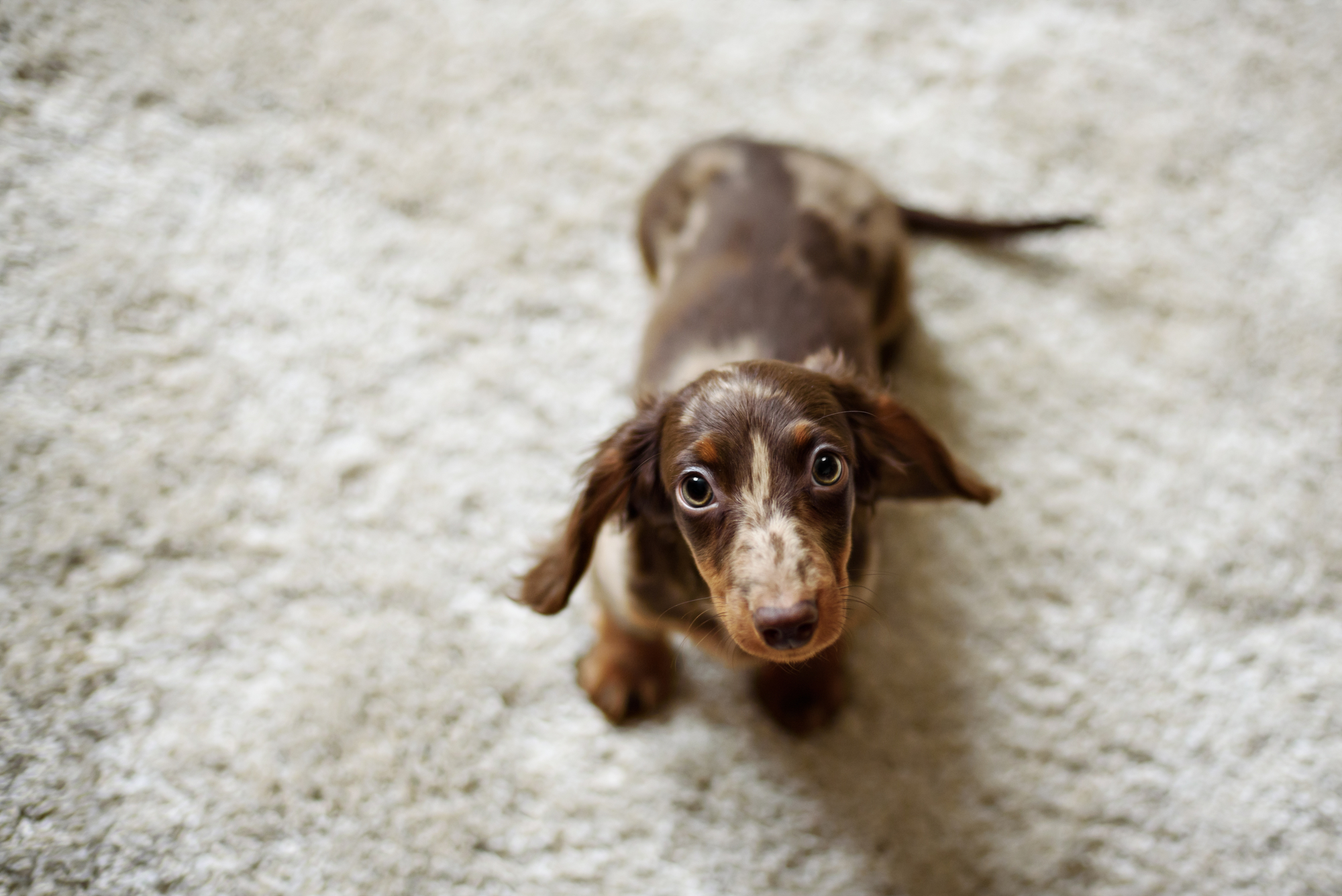 What size crate for a Miniature Dachshund? Best dog crates and ...
